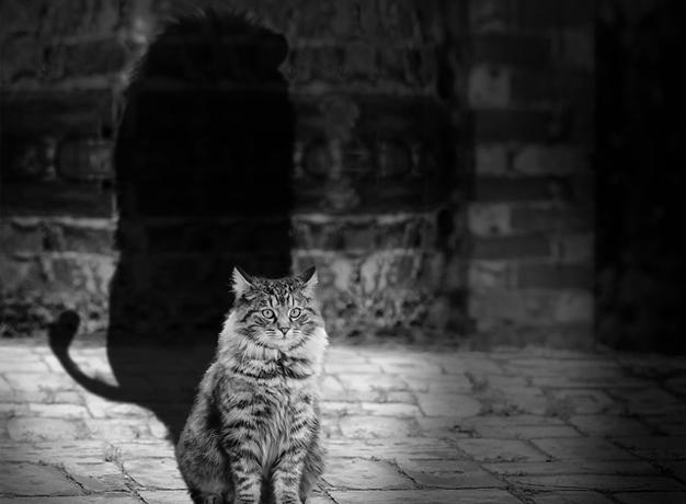 kot lwem, człowiek kulturystą