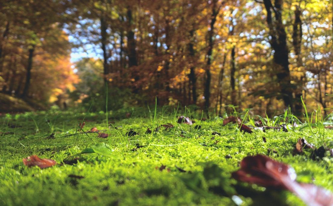 Dmuchawy i odkurzacze do liści Stihl na Ceneo.pl pozwolą Ci zadbać o ogród przed zimą.